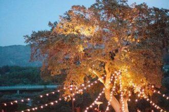 Buiten-bruiloft: organiseer een festival bruiloft!